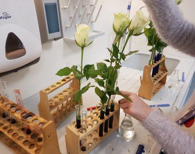Gesamtschule Wanne-Eickel Ganztag Versuchsaufbau Blumenexperiment